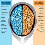 corpus callosum left and right